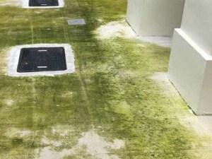 beton impregneren, groene aanslag, alg aanslag, mos aanslag, micro organismen, alg werend, m
