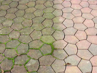 steen bestrating alg mos schimmels voorkomen