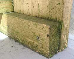 steigerhout behandelen tegen mos algen
