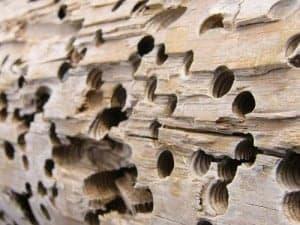 Woodseal voorkomt - termieten houtworm